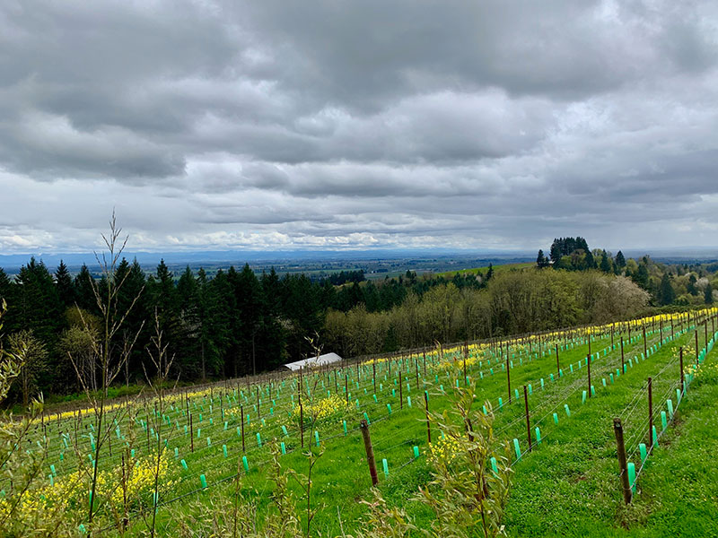 Driveawayz™ technologies oregon wine country driven tours dundee yamhill